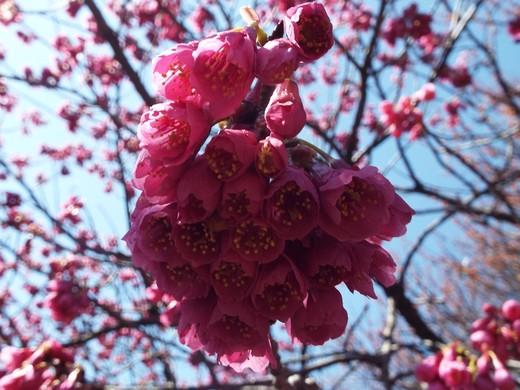 3月15日 王禅寺ふるさと公園。_e0145782_10381562.jpg