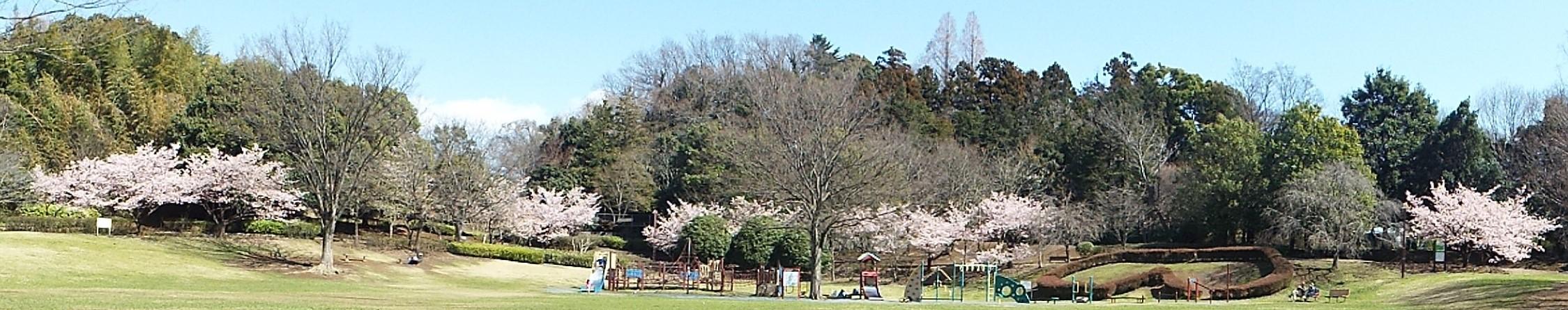 3月15日 王禅寺ふるさと公園。_e0145782_10392194.jpg