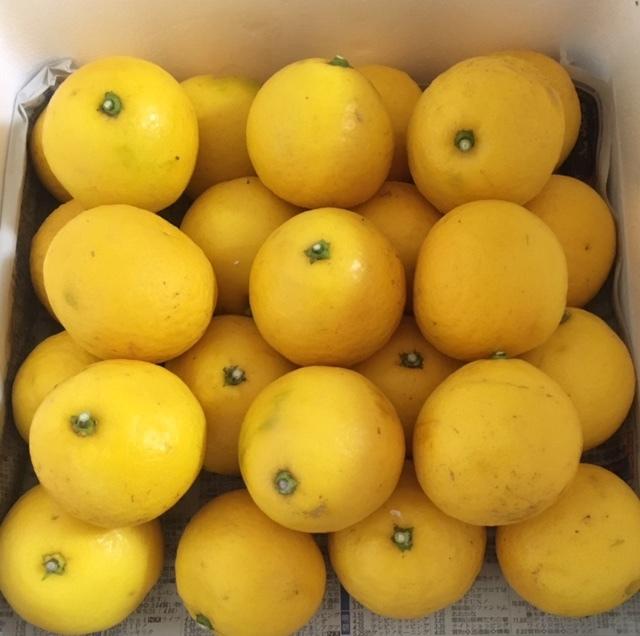 オレンジと花_c0340785_17494034.jpg