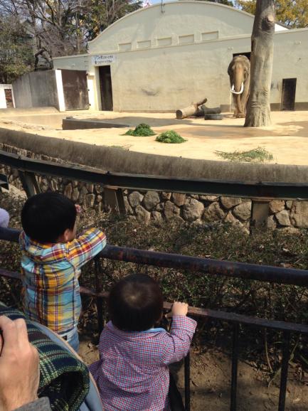 2016 春の動物園_a0188798_13434284.jpg