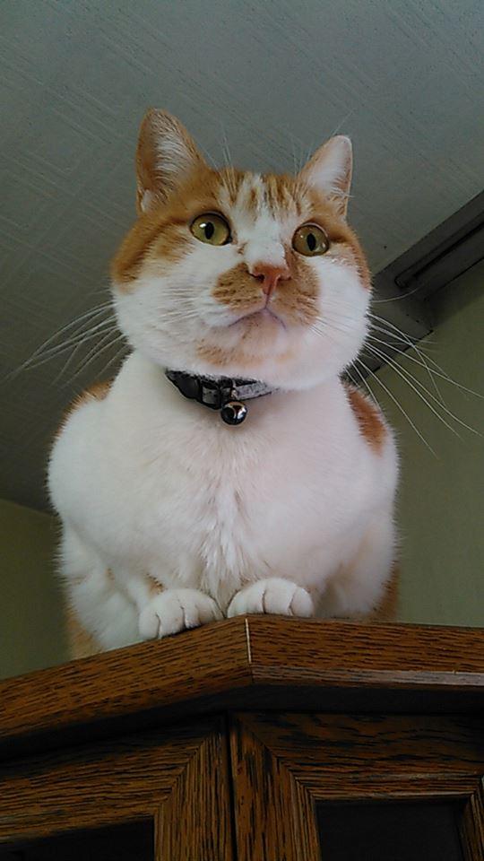 【猫】悪い所を!?_f0141609_22403073.jpg