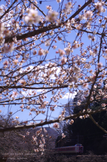 梅の花咲く_d0309612_0415853.jpg