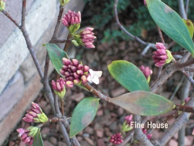 春を感じる🌼_e0339444_12504320.jpg