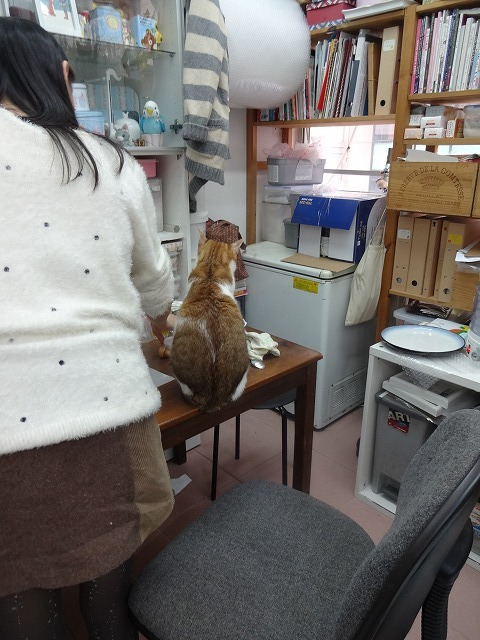 阿猫地攤(猫cafe) 猫ちゃん編 _b0248150_07322355.jpg