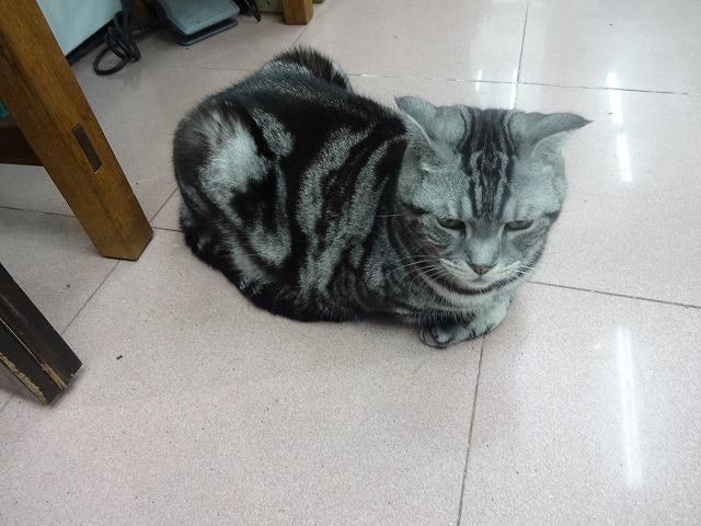 阿猫地攤(猫cafe) 猫ちゃん編 _b0248150_07374830.jpg