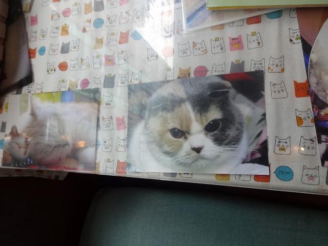 阿猫地攤(猫cafe) 猫ちゃん編 _b0248150_07400051.jpg