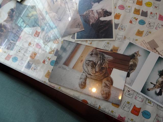 阿猫地攤(猫cafe) 猫ちゃん編 _b0248150_07413675.jpg