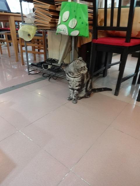 阿猫地攤(猫cafe) 猫ちゃん編 _b0248150_07435908.jpg