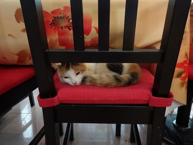 阿猫地攤(猫cafe) 猫ちゃん編 _b0248150_07443661.jpg
