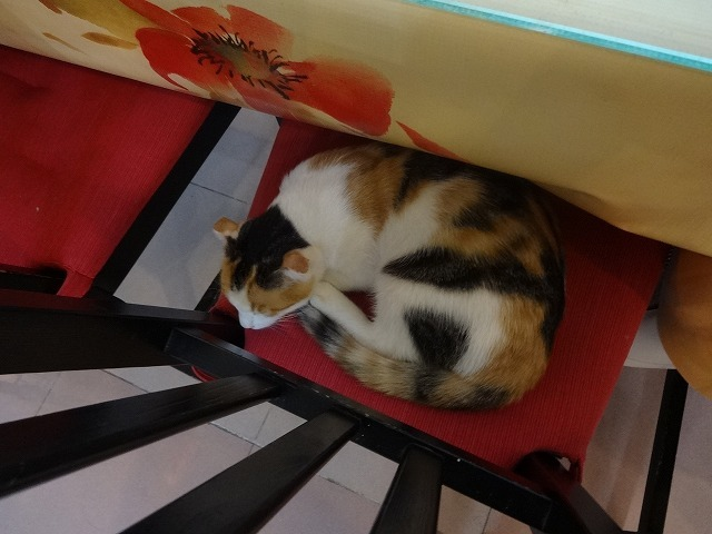 阿猫地攤(猫cafe) 猫ちゃん編 _b0248150_07455240.jpg