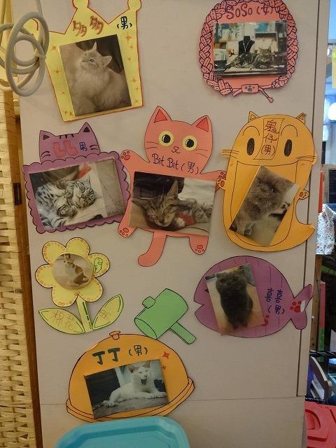阿猫地攤(猫cafe) 猫ちゃん編 _b0248150_07463611.jpg