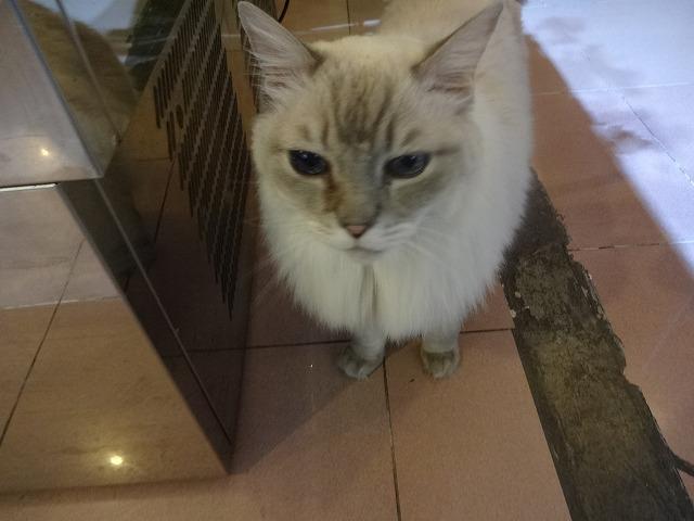 阿猫地攤(猫cafe) 猫ちゃん編 _b0248150_07530181.jpg