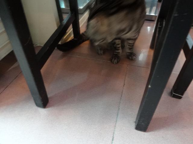 阿猫地攤(猫cafe) 猫ちゃん編 _b0248150_07541784.jpg