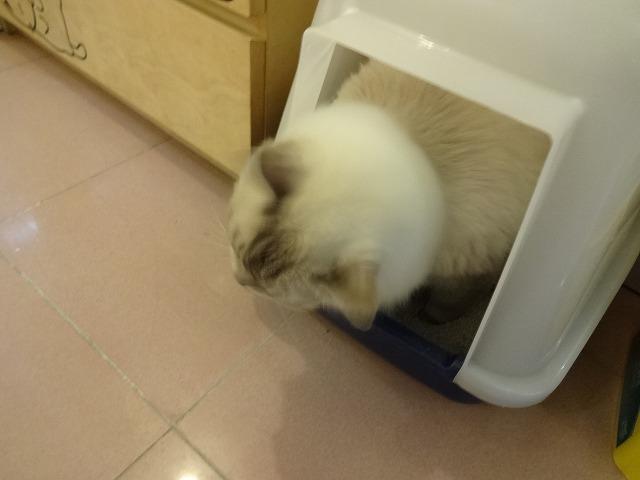 阿猫地攤(猫cafe) 猫ちゃん編 _b0248150_07555722.jpg