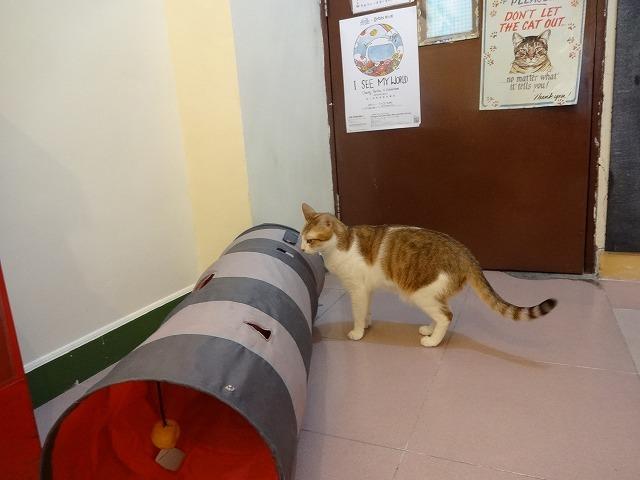 阿猫地攤(猫cafe) 猫ちゃん編 _b0248150_08002188.jpg