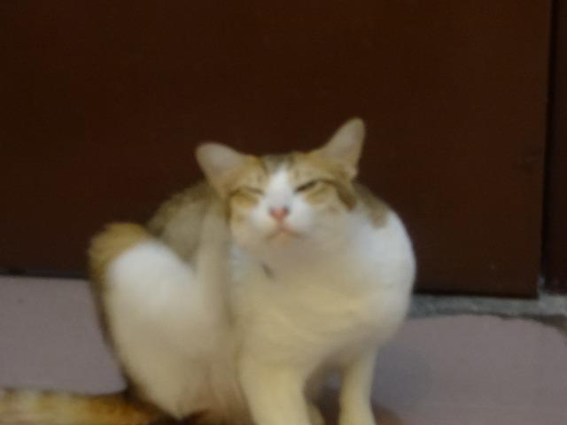 阿猫地攤(猫cafe) 猫ちゃん編 _b0248150_08014191.jpg