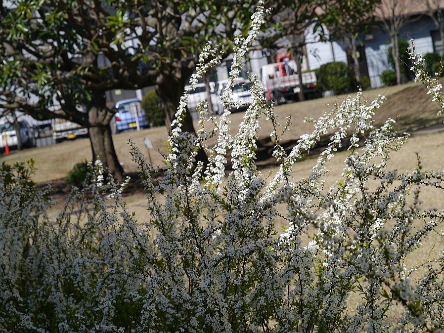 春の陽気_f0178858_1643329.jpg