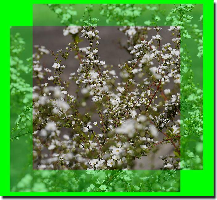 春の陽気_f0178858_1644510.jpg
