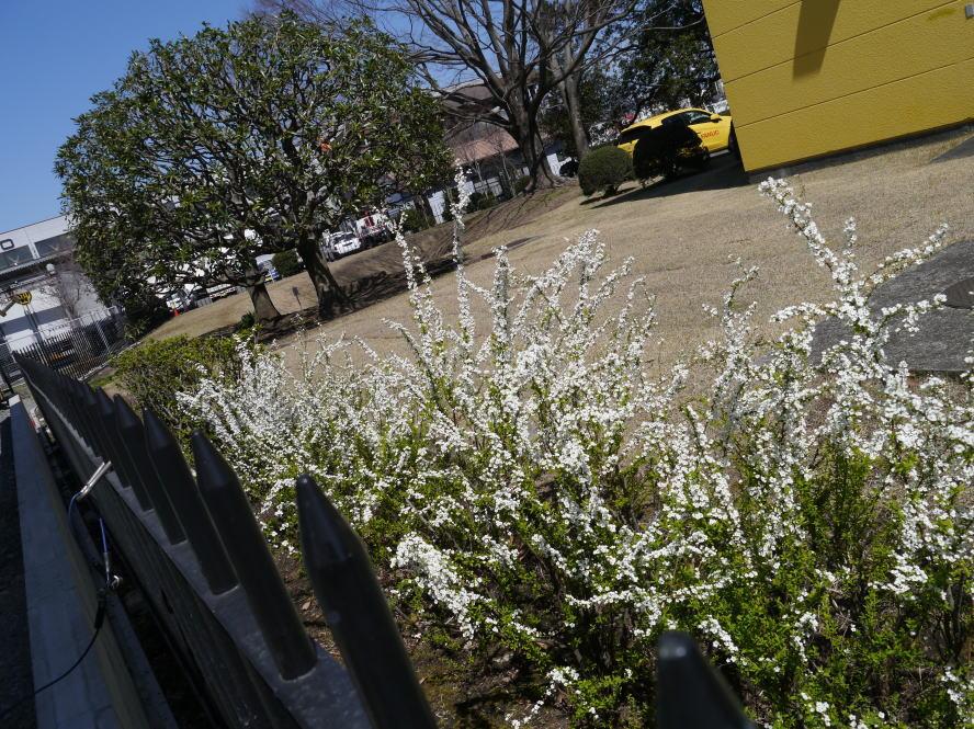 春の陽気_f0178858_164794.jpg