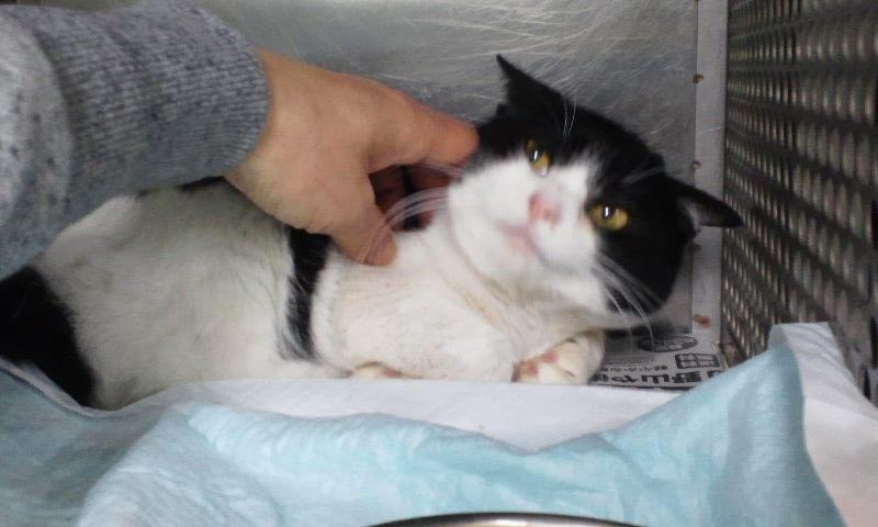 【移動先募集】センター(支所)収容の猫たち(3/16訪問)_f0242002_1152668.jpg