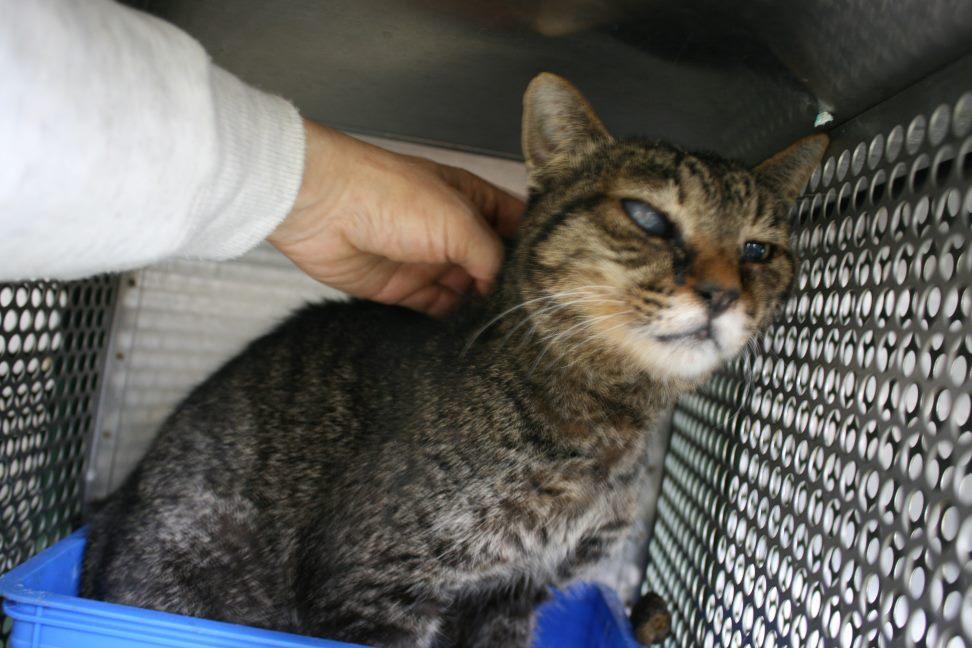 【移動先募集】センター(支所)収容の猫たち(3/16訪問)_f0242002_1161950.jpg