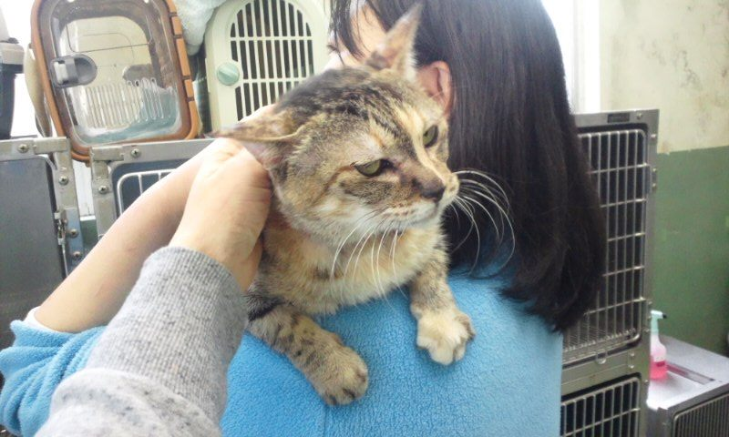 【移動先募集】センター(支所)収容の猫たち(3/16訪問)_f0242002_1181040.jpg