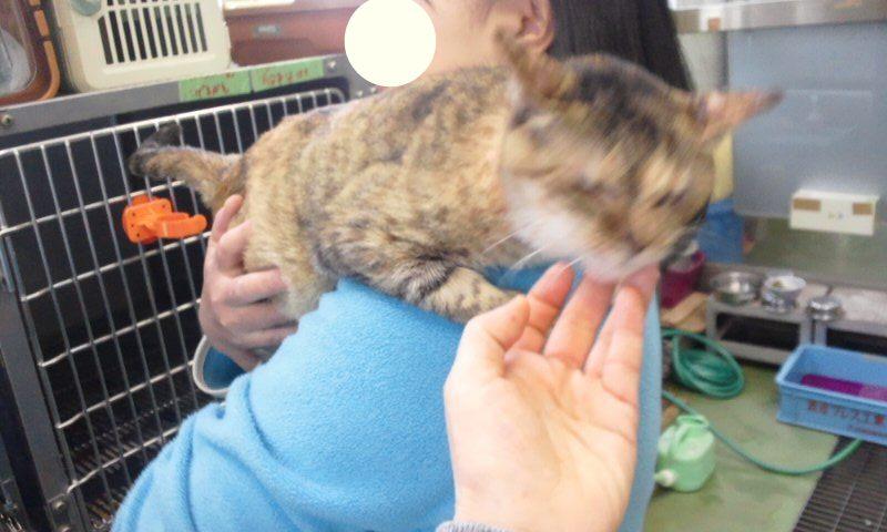 【移動先募集】センター(支所)収容の猫たち(3/16訪問)_f0242002_1191852.jpg
