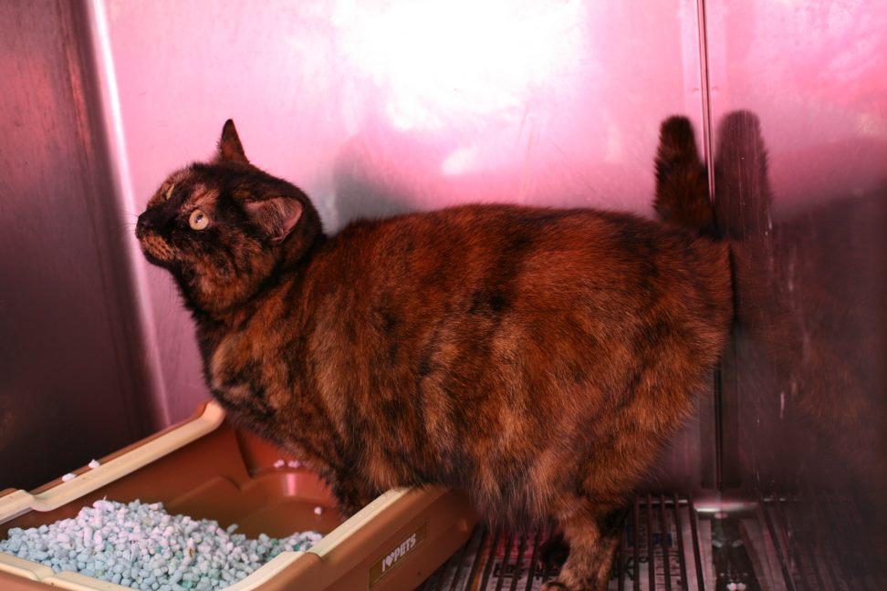 【移動先募集】センター(支所)収容の猫たち(3/16訪問)_f0242002_1211258.jpg