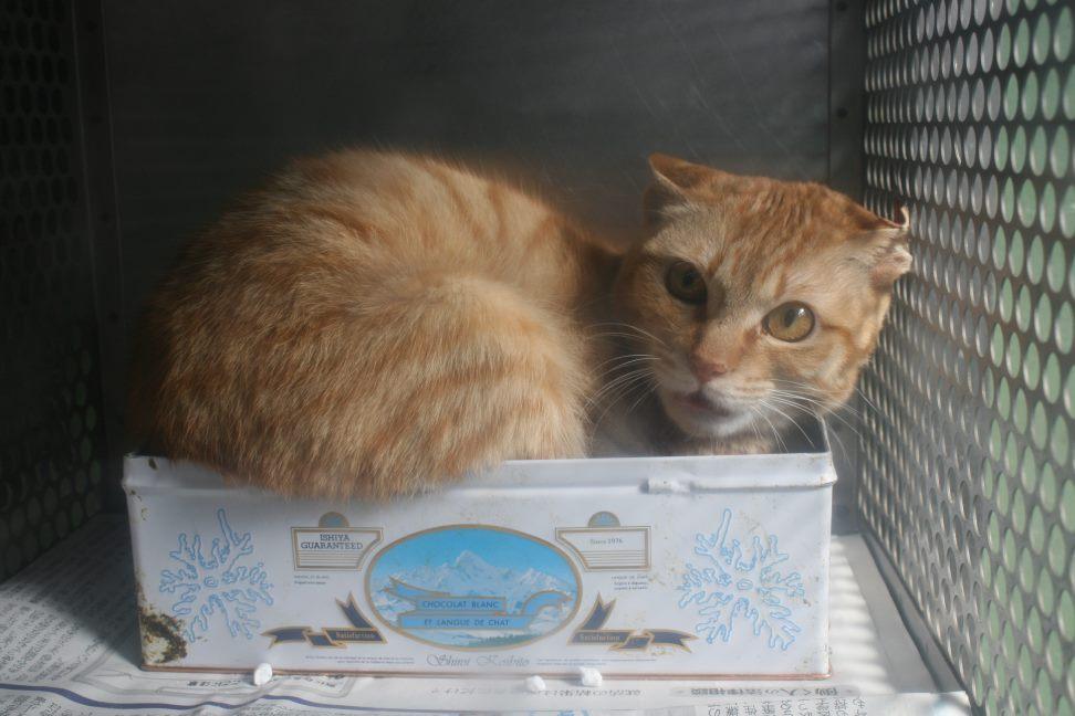 【移動先募集】センター(支所)収容の猫たち(3/16訪問)_f0242002_121337.jpg