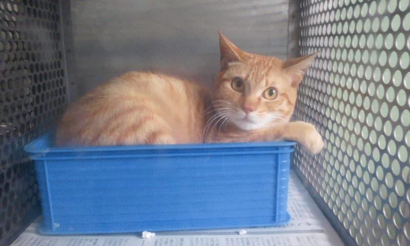 【移動先募集】センター(支所)収容の猫たち(3/16訪問)_f0242002_122345.jpg