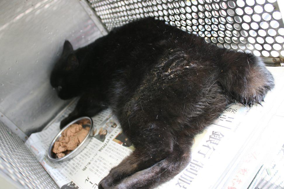 【移動先募集】センター(支所)収容の猫たち(3/16訪問)_f0242002_123241.jpg