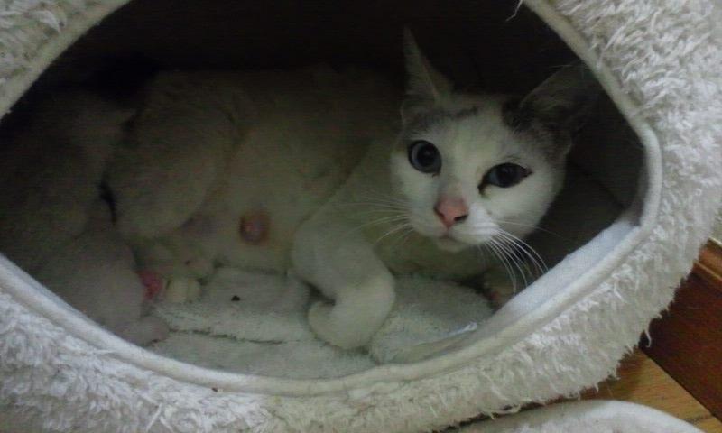 【移動先募集】センター(支所)収容の猫たち(3/16訪問)_f0242002_125011.jpg