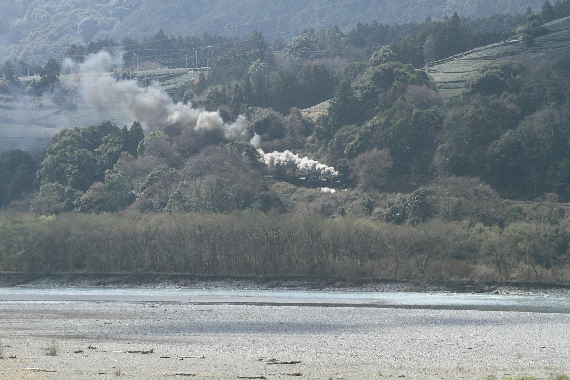 もやもやと新緑芽吹く大井川に煙が光る - 2016年・大井川重連 -    _b0190710_2343642.jpg