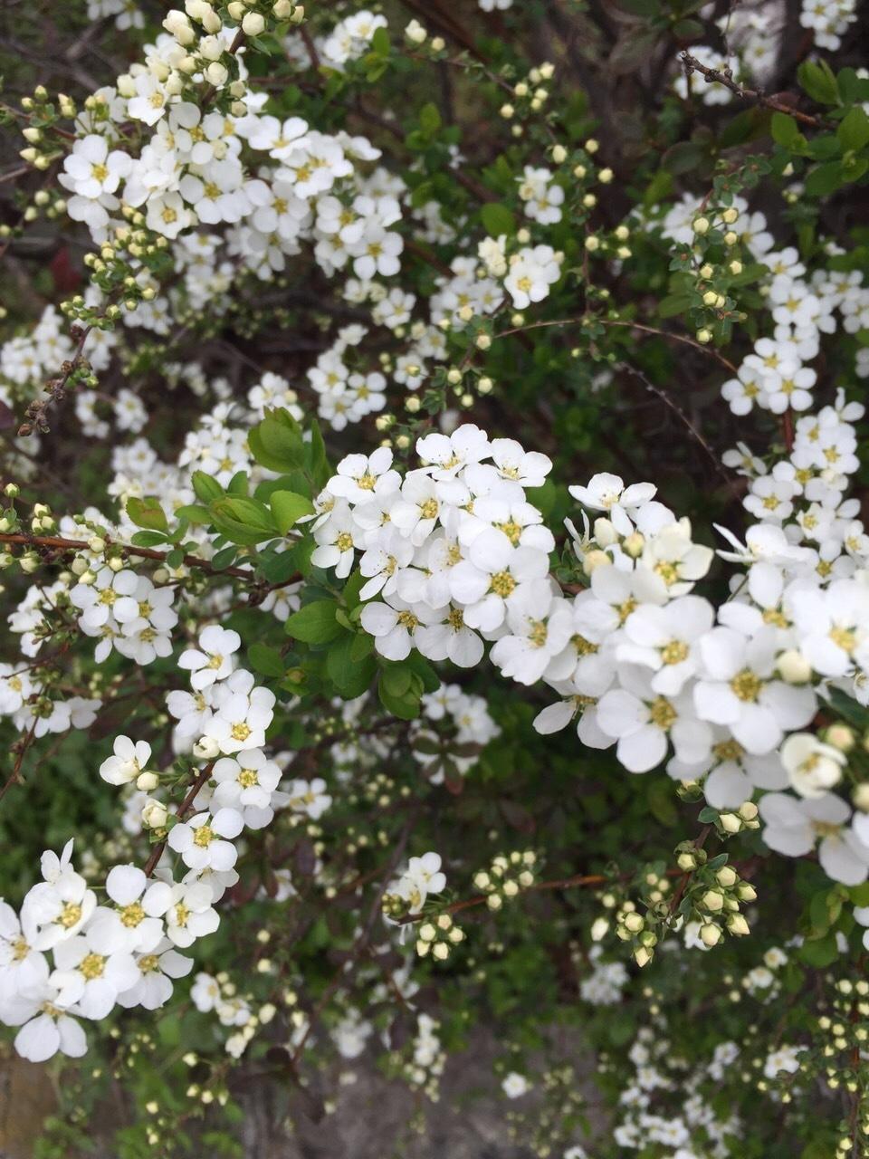 春ですねぇ。_f0283816_12272454.jpg