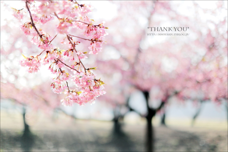 お花見シーズン到来!「桜ショット」をきれいに&かわいく撮るコツ!_d0350330_01221709.jpg