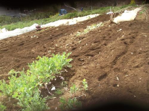 冬野菜は終了..春に.._b0137932_1458183.jpg