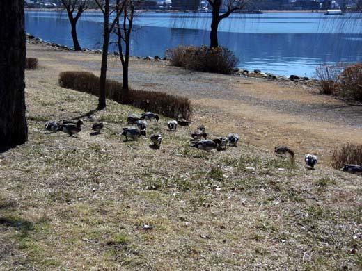 諏訪湖畔_d0127634_16275581.jpg