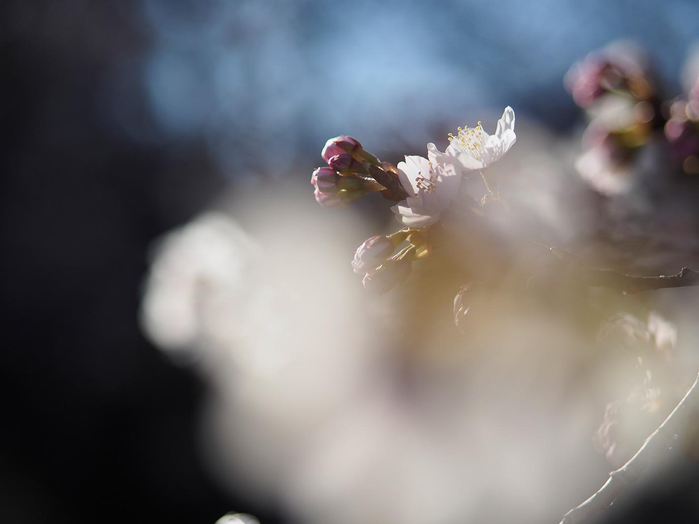 桜咲く頃_f0121181_046166.jpg