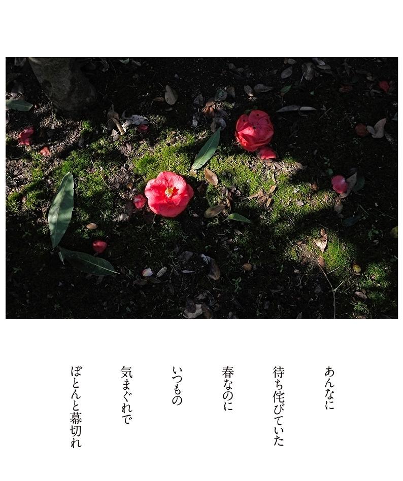 ぽとん_b0355531_14255687.jpg