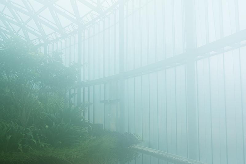 新宿御苑、早咲きの桜_a0003650_22331949.jpg