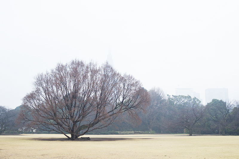新宿御苑、早咲きの桜_a0003650_22352518.jpg