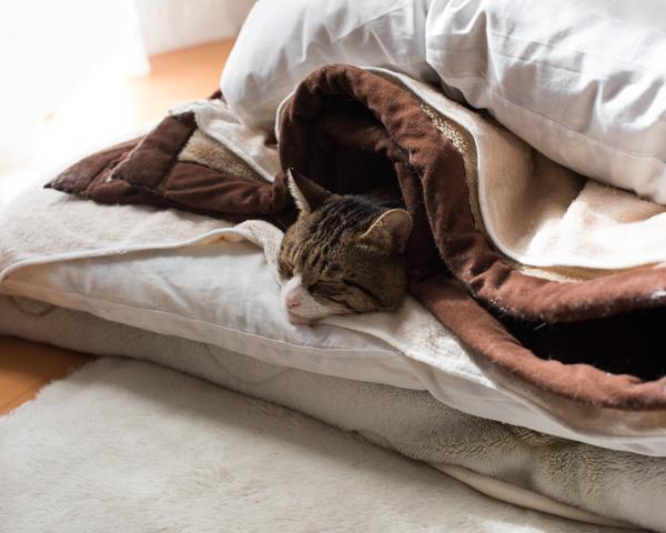 16.03.19 猫のミルフィーユ_b0193366_1812371.jpg