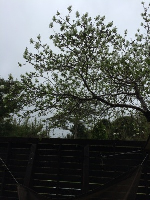 春の予感_e0315178_14414803.jpg
