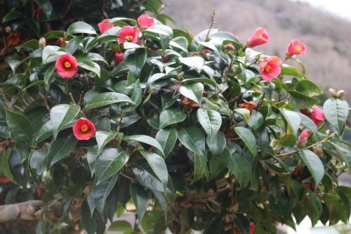 まだ咲いていました。_a0125981_22370906.jpg