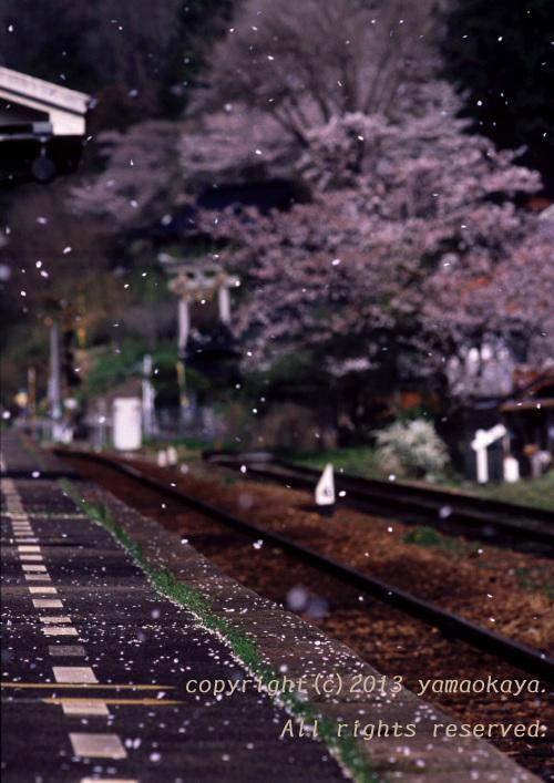 桜の季節へと_d0309612_23034346.jpg