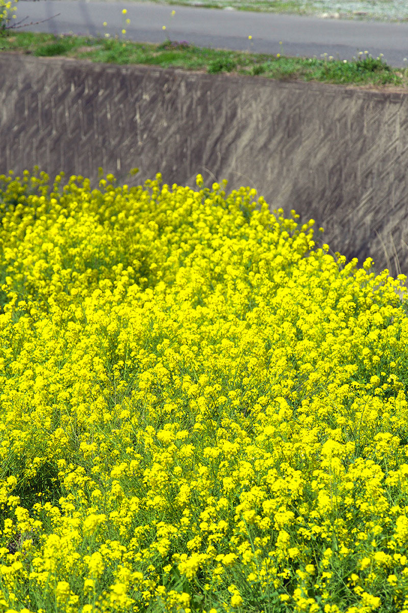 春の空から_c0136239_2357656.jpg