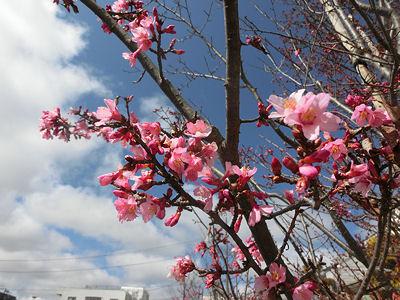 そろそろ目覚めの花の寺_f0019247_1234916.jpg