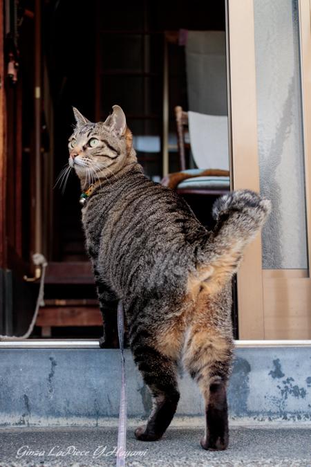 猫のいる風景 振り向きレイコちゃん_b0133053_091762.jpg