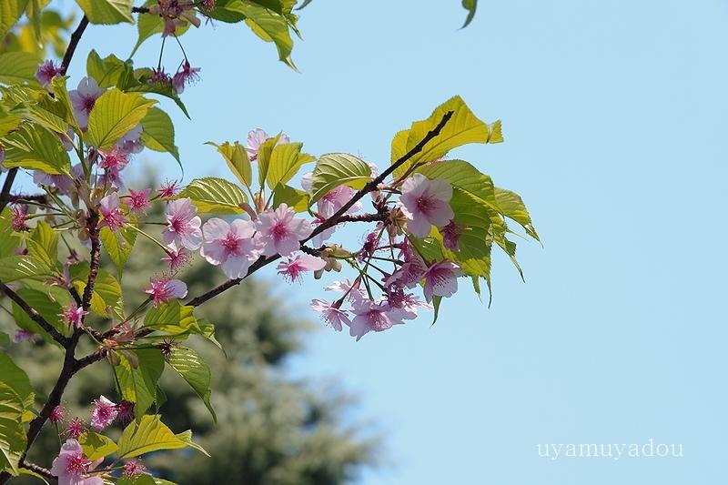 公園の朝_a0157263_21432720.jpg