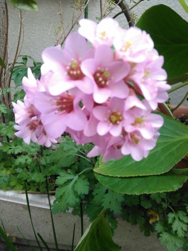 散歩の時の花_c0162773_23562849.jpg